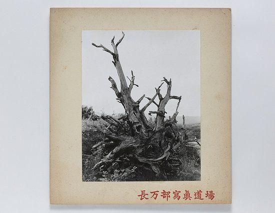 開拓作業で掘り起こされた根株